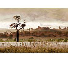 Gondwana Boab Photographic Print