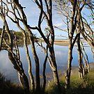 Lakeside by Catherine Davis