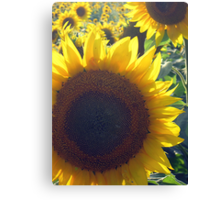 Yello! Canvas Print