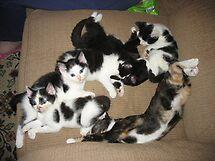 Kittens. by Tramper