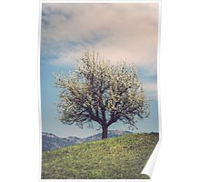 Blossom tree on a hill in Switzerland Poster