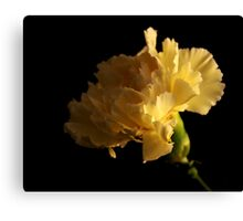 Yellow Carnation Canvas Print