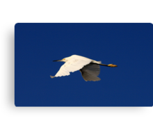 Flight of the White Egret Canvas Print