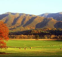Late Autumn Afternoon in Cades Cove by Rodney Williams