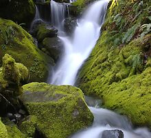 Whitehead Creek #2 by Allan  Erickson