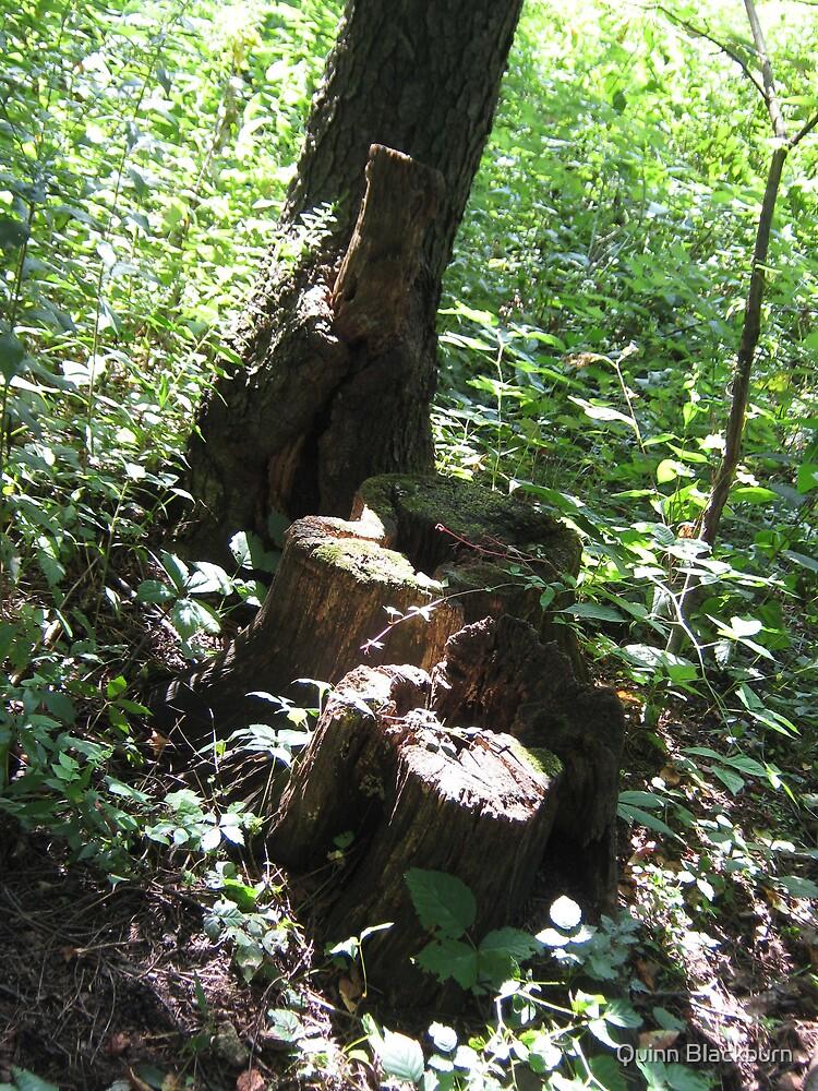 Nature's Gift by Quinn Blackburn