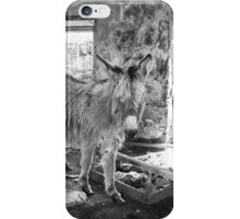 Wild Irish Donkeys iPhone Case/Skin