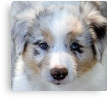 Puppy Beauty. Canvas Print