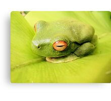 Contrasting Camouflage Canvas Print