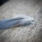 Feather by Lawrence Crisostomo