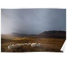 Quairang Sheep Poster