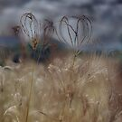Grass Hearts © Vicki Ferrari Photography by Vicki Ferrari