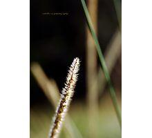 Soft Touch Simply © Vicki Ferrari Photographic Print