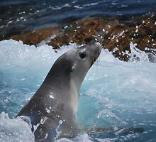 Sea Lion in the surf by Sealinator