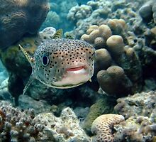 Porcupine fish by lilithlita