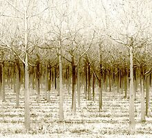 The Forest for the Trees by Holly Kempe