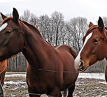 Indiana Horses by Dave Nielsen