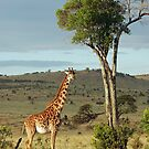 Giraffe - Masai Mara by Brad Francis