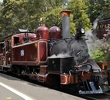 Puffing Billy by Tamara Bush