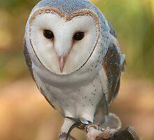 """Skye"" the Barn Owl by rflower"