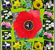 Spring Has Sprung Collage by BlueMoonRose