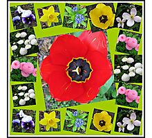 Spring Has Sprung Collage Photographic Print