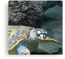 Bermuda - Sea Turtle Canvas Print