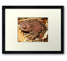 Fluffy Common Toad Framed Print