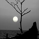 Moon Lit by AroonKalandy