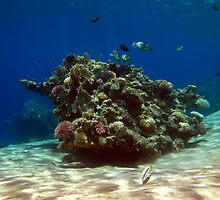 Beutiful corals  by cooperscuba