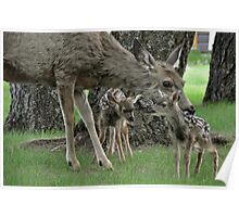 Newborn Bambies  Poster