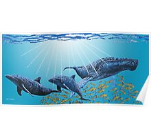 Humpback and Dolphins Poster