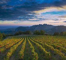 French Vineyard at Sunset by Bruce Alexander