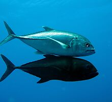 Giant trevally	 by cooperscuba