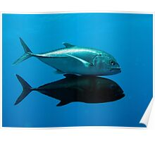 Giant trevally	 Poster