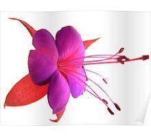 'Spring Ballet Series - Fuschia Tutu' Poster