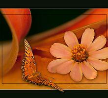 Orange Delight by Bonnie T.  Barry
