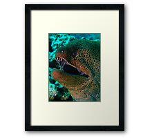 Giant Moray Framed Print