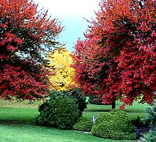 Autumn in Steubenville by triciamary