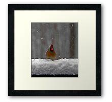 Snowy Cardinal Framed Print