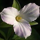 Last Blush of Spring by Lynn Gedeon