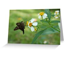 Long Tailed Skipper on Spanish Needle Greeting Card