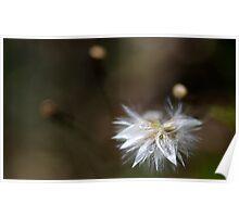 dandy flower Poster