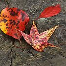 Fall Colors by Lisawv
