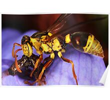 Yellow Paper Wasp Poster