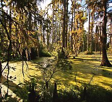 Swamp Beauty by photosan