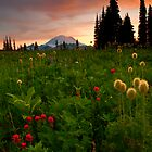 Paintbrush Sunset by DawsonImages