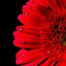 red red red by Meghan  Baldock