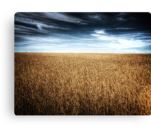 Alberta Wheat Field Canvas Print