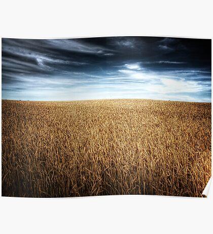 Alberta Wheat Field Poster